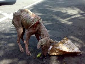 Street dog Gianyar Bali 2009