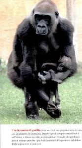 gorila morte_2