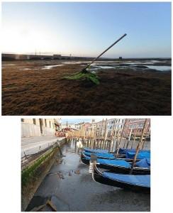 basa marea en lagouna