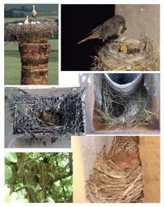 Nidi di uccelli
