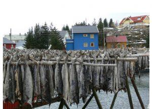 stockfisch