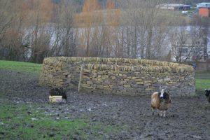 Sheep_Fold