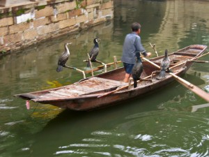 Cormorant_fishing_-Suzhou_-China-6July2005-2