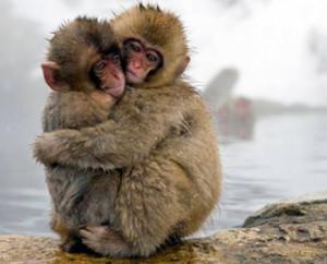 SPETTACOLO-One-life-BBC-scimmie
