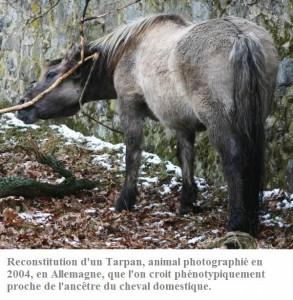 Tarpan-Sababurg