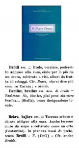 broili bearz