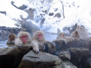 Jigokudani_hotspring_in_Nagano_Japan_001