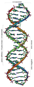 DNA_Overview_it