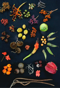Forest_fruits_from_Barro_Colorado