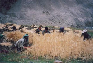 Medar Tibet