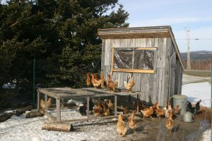 Chicken_coop_in_winter